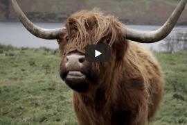 scotland-highlands-campervan roadtrip 2019 youtube video